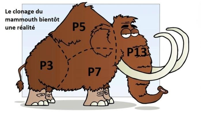 Mammouth P3-P5-P7-P13